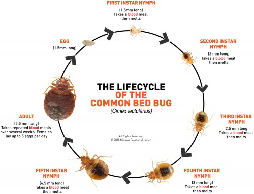 Spaces-Bed Bugs